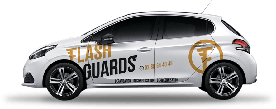 Voiture Flashguards