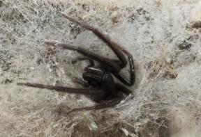 traitement contre les araignées alsace