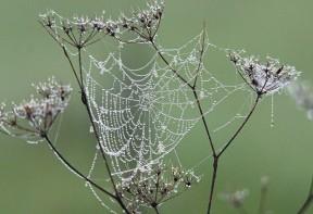 traitement contre les araignées en alsace
