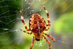 Traitement des araign es de maison en alsace flashguards - Lutter contre les araignees ...