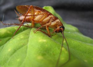 traitement blattes cafards alsace