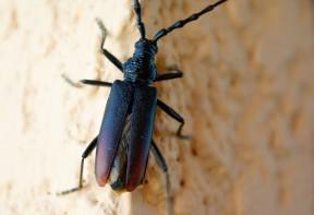 Traitement contre les capricornes en alsace flashguards - Comment savoir si on a des termites ...