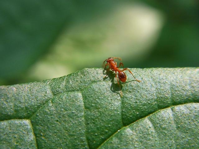 traitement fourmis alsace