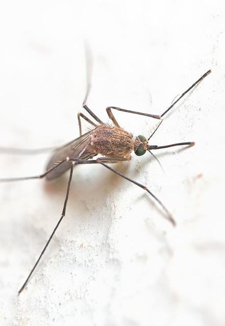 traitement moustiques alsace