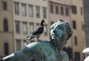 les pigeons font des dégats sur les monuments publics