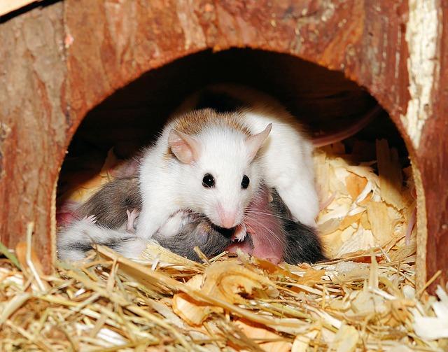 traitement souris alsace